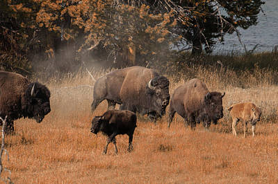 Photograph - Home On The Range by Cliff Wassmann