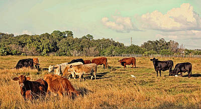 Photograph - Home On The Range by HH Photography of Florida