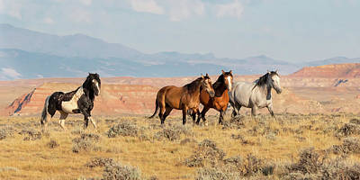Photograph - Home On The Range by Jack Bell