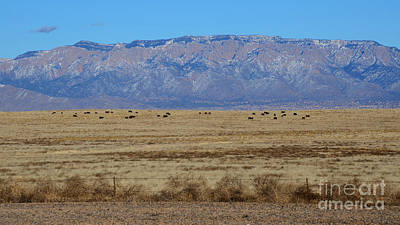 Photograph - Home On The Range by Robert WK Clark