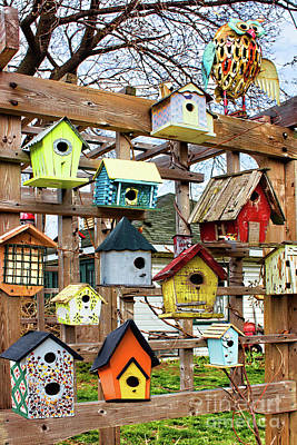 Photograph - Home Tweet Home by Barbara McMahon