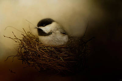 Chickadee Photograph - Home Tweet Home by Jai Johnson