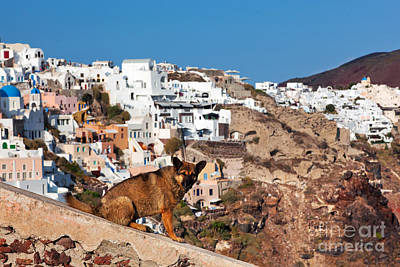 Photograph - Homeless Stray Dog Sitting On Stone Wall In Oia Town by Michal Bednarek