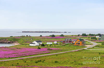 Photograph - Homes And Flowers On The Atlantic Coast In Gaspe by Les Palenik