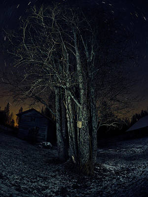 Photograph - Hometree In The Universe by Jouko Lehto