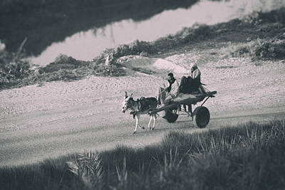 Donkey Photograph - Homewards.. by A Rey