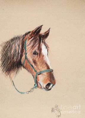 Honcho At The Morgan Horse Ranch Prns Art Print by Paul Miller