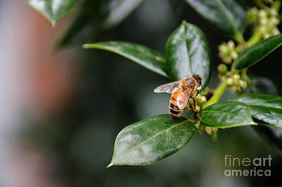 Photograph - Honey Bee 2 by Andrea Anderegg