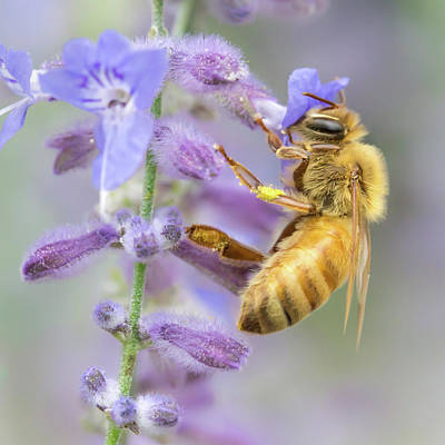 Buzz Photograph - Honey Bee 2 by Jim Hughes