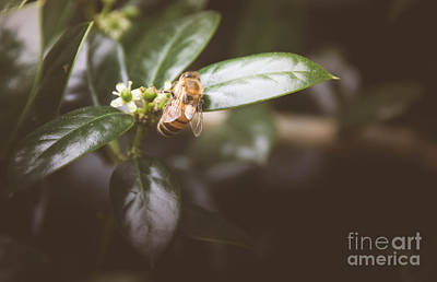 Photograph - Honey Bee 3 by Andrea Anderegg