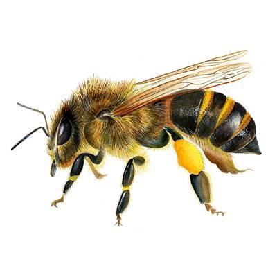 Painting - Honey Bee by Alison Langridge