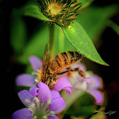 Photograph - Honey Bee And Pollen by David A Lane