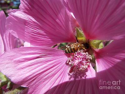 Photograph - Honey Bee by John Bailey Photos