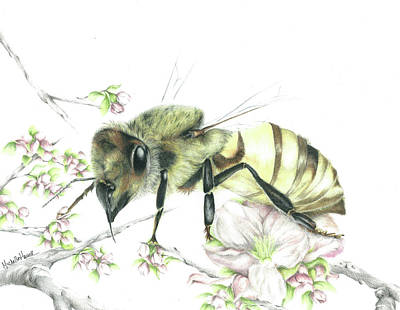 Honey Bees Drawings