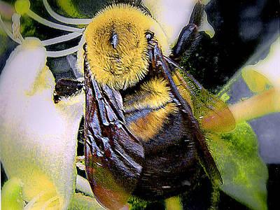 Photograph - Honey Bee On Honey Suckle by Merton Allen