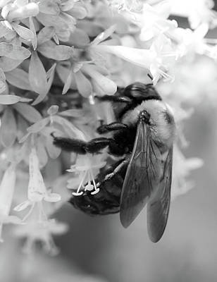 Photograph - Honey Bee by Phyllis Peterson