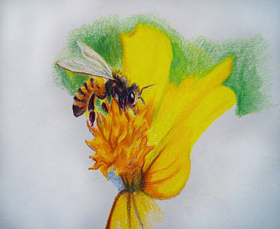 Drawing - Honey Bee Sketch by Emily Maynard