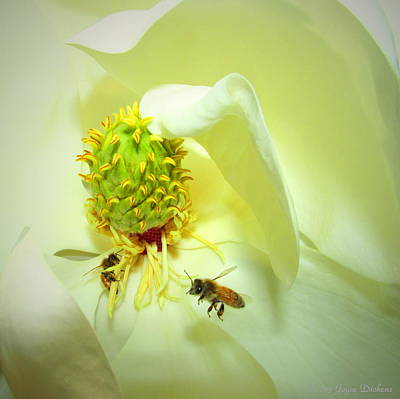 Photograph - Honey Bees And Magnolia II by Joyce Dickens