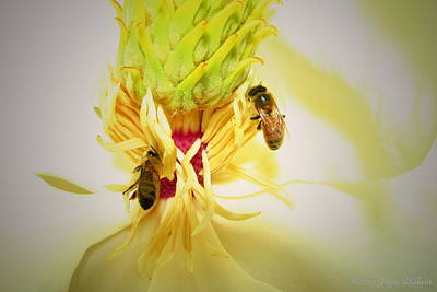 Photograph - Honey Bees And Magnolia by Joyce Dickens