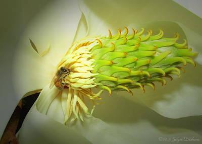 Photograph - Honey Bees And Magnolia Three by Joyce Dickens