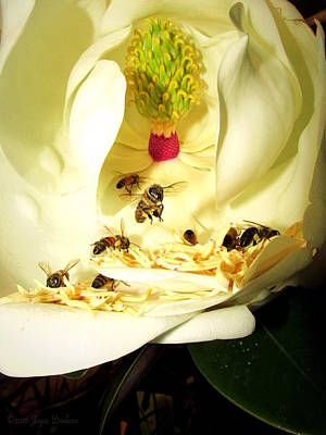 Photograph - Honey Bees And Magnolias by Joyce Dickens