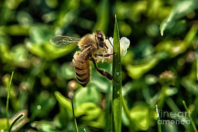 Bee Photograph - Honey Black Gold 1 by Pittsburgh Photo Company