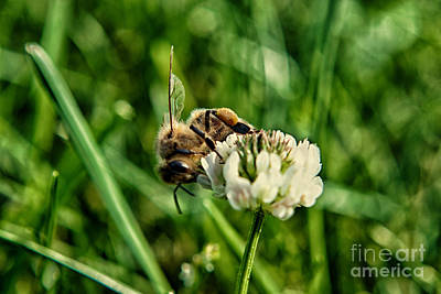 Bee Photograph - Honey Black Gold 2 by Pittsburgh Photo Company