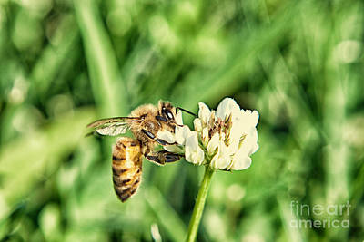 Bee Photograph - Honey Black Gold 3 by Pittsburgh Photo Company