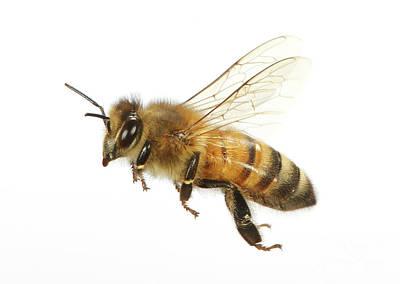 Honey Bound Art Print