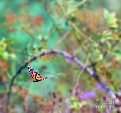 Photograph - Honey From The Moment - Monarch Butterfly In Flight by Kerri Farley