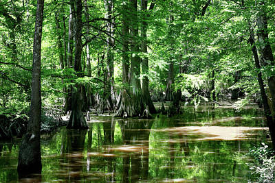 Photograph - Honey Island Swamp by Nicholas Blackwell