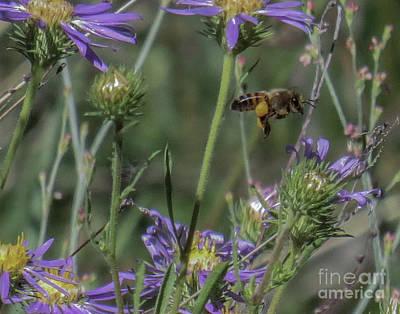 Honeybee 2 Art Print