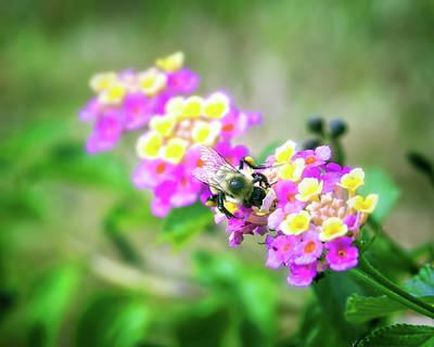 Beauty Mark Photograph - Honeybee Garden by Mark Andrew Thomas