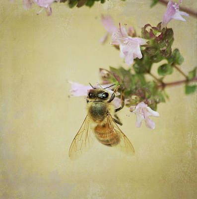 Photograph - Honeybee  by Marilyn Wilson