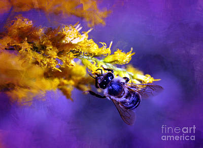 Photograph - Honeybee On Goldenrod by Judi Bagwell