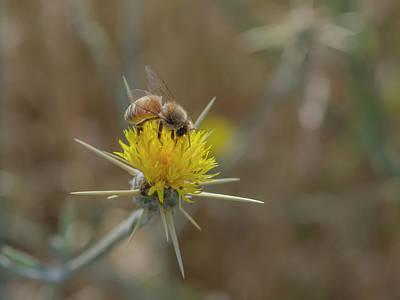 Photograph - Honeybee by Rick Mosher