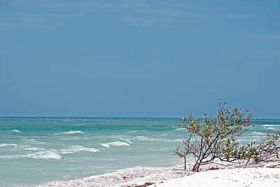 Peter Mcintosh Photograph - Honeymoon Island Shores by Peter  McIntosh