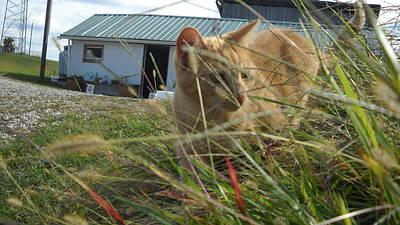 Honeysuckle Cat Hunting Original by Pat Nalls