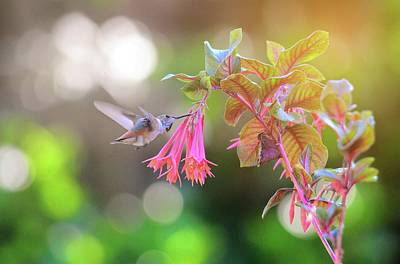 Photograph - Honeysuckle Fuchsia Feast by Lynn Bauer