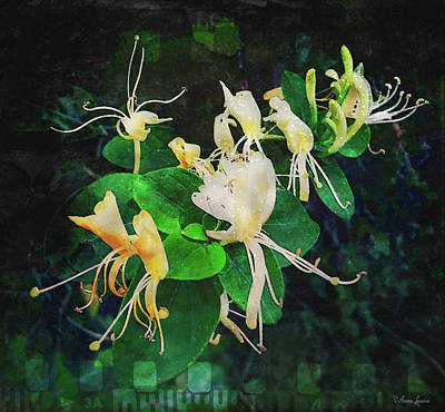 Photograph - Honeysuckle On Old Film by Anna Louise