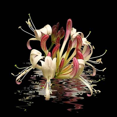 Photograph - Honeysuckle Reflections by Gill Billington