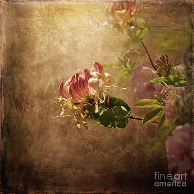 Digital Art - Honeysuckle Rose by Liz Alderdice