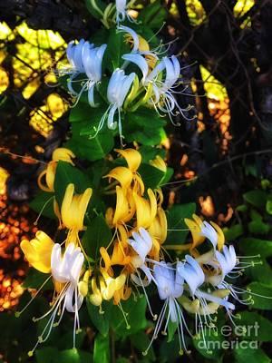 Photograph - Honeysuckle Sweet by Jenny Revitz Soper
