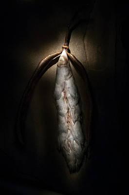 Photograph - Hong Kong Orchid Seed Pod #3 by Lou Novick
