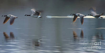 Photograph - Honkers by Nick Boren