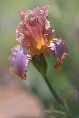 Photograph - Honky Tonk Rumble. The Beauty Of Irises by Jenny Rainbow