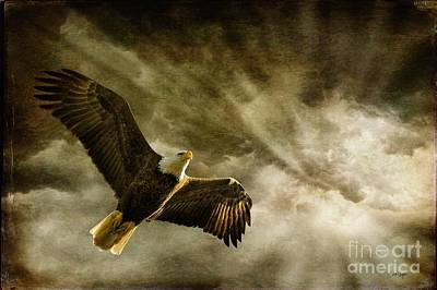 Eagle In Flight Photograph - Honor Bound by Lois Bryan