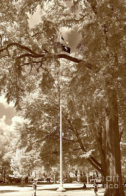 Photograph - Honor On The Univerity Of South Carolina In Sepia by Skip Willits