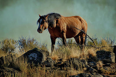 Photograph - Honored Stallion by Steve McKinzie