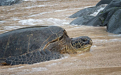 Photograph - Honu At Hookipa by Randy Hall